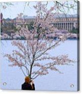 Chasing Blossoms Acrylic Print