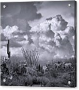 Chasing Clouds Again In Black And White  Acrylic Print