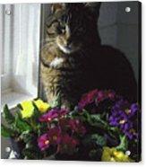 Chat Et Fleurs Acrylic Print