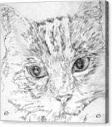 Chat Somnolant Resting Cat Acrylic Print