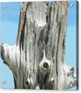 Chatham Driftwood Acrylic Print