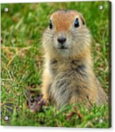 Check Out My Good Side Acrylic Print