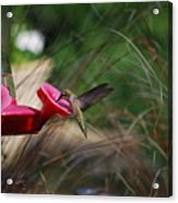 Check Out My Wings Acrylic Print