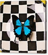 Checker Plate And Blue Butterfly Acrylic Print by Garry Gay