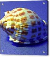 Checkered Helmet Seashell Acrylic Print