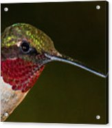 Checking Out The Photographer Acrylic Print