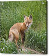 Checking The Perimeter Acrylic Print