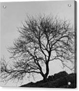 Cheddar Gorge Tree Acrylic Print