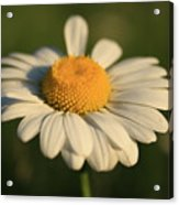 Cheerful Acrylic Print