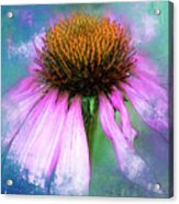Cheerful. Acrylic Print