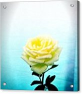 Cheerful Yellow Rose Acrylic Print