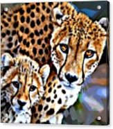 Cheetah Family Acrylic Print