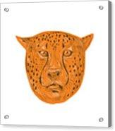 Cheetah Head Drawing Acrylic Print
