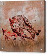 Cheetah Hunting Acrylic Print