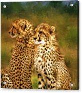 Cheetah Siblings Acrylic Print