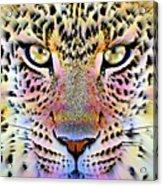 Cheetah Vi Acrylic Print