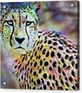 Cheetah Viii Acrylic Print