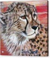Blaa Kattproduksjoner       Cheetahs Face Acrylic Print