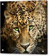 Cheetaro Acrylic Print by Big Cat Rescue