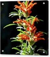 Cheeto Plant Portrait Acrylic Print