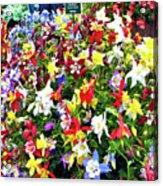 Chelsea Flower Show Acrylic Print