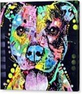 Cherish The Pitbull Acrylic Print by Dean Russo