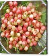Cherries 8 Acrylic Print