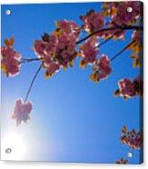Cherries In The Sky Acrylic Print