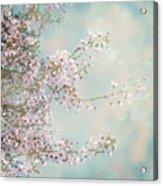 Cherry Blossom Dreams Acrylic Print