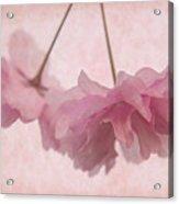 Cherry Blossom Froth Acrylic Print