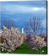 Cherry Blossom Liberatum Acrylic Print