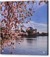 Cherry Blossom Over Tidal Basin Acrylic Print