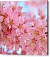 Cherry Blossom Pastel Acrylic Print