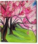 Cherry Blossom Sakura Acrylic Print