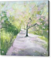 Cherry Blossom Tree Central Park Bridle Path Acrylic Print