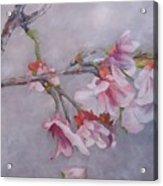 Japanese Cherry Blossom Tree Acrylic Print