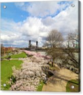 Cherry Blossom Trees At Portland Waterfront Acrylic Print