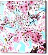 Cherry Blossom Watercolor Acrylic Print