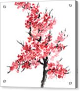 Cherry Blossom Watercolor Poster Acrylic Print