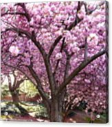Cherry Blossom Wonder Acrylic Print