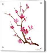 Cherry Blossoms 2f Acrylic Print