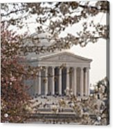 Cherry Blossoms And The Jefferson Memorial Acrylic Print