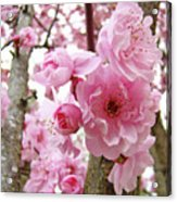Cherry Blossoms Art Prints 12 Cherry Tree Blossoms Artwork Nature Art Spring Acrylic Print