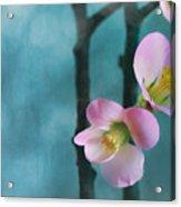 Cherry Blossom Bokeh Acrylic Print