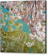 Cherry Blossoms Close Up Six Acrylic Print
