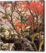 Cherry Blossoms II Acrylic Print