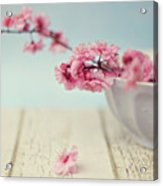 Cherry Blossoms In Bowl Acrylic Print
