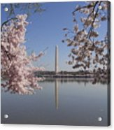 Cherry Blossoms Monument Acrylic Print