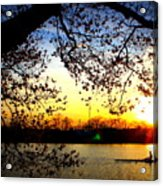 Cherry Blossoms On The Charles Acrylic Print