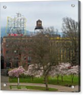 Cherry Blossoms Trees In Portland Old Town Acrylic Print